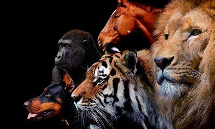 【威爾Hold住】為什麼你的保養品用了無感?用「動物」讓你秒懂配方的秘密!
